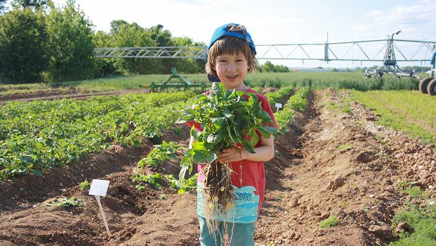 A child enjoys activities at Open Farm Sunday