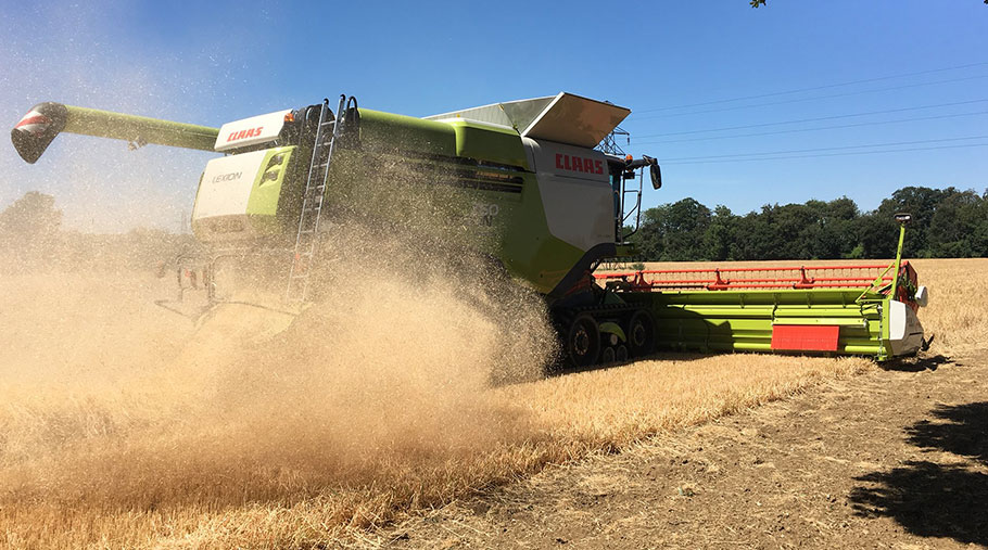 A combine works through barley