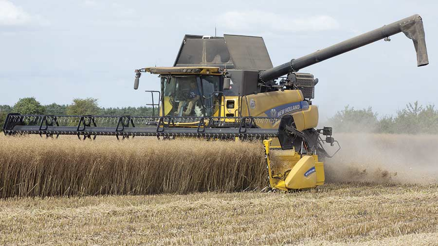 Oilseed rape is harvested