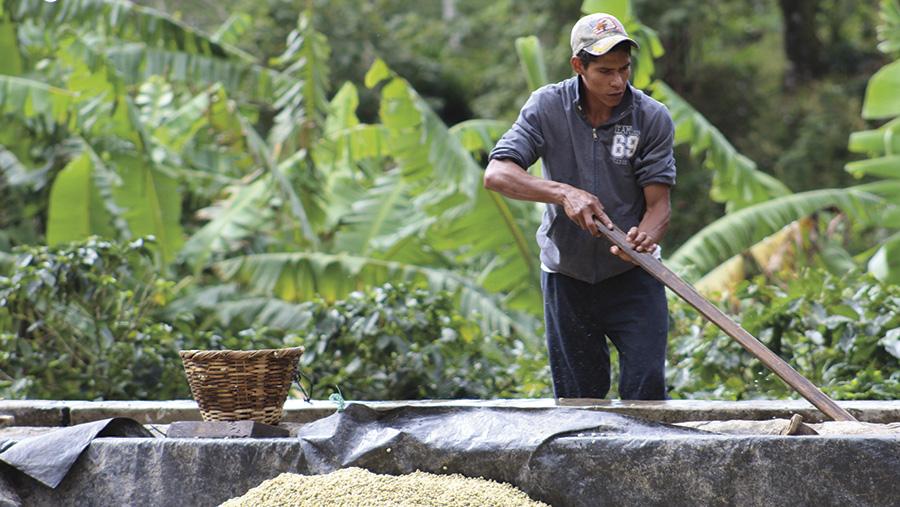 A coffee farmer in Nicaragua