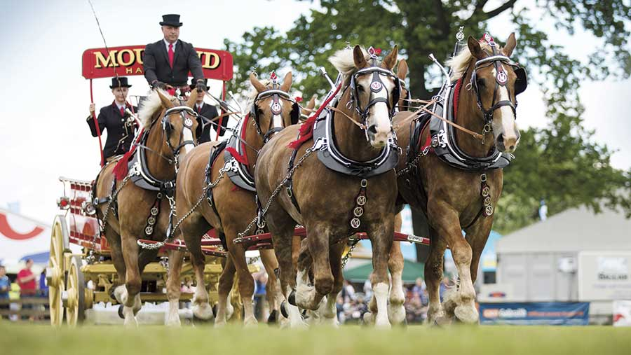 Clydesdale horses pulling a wagon