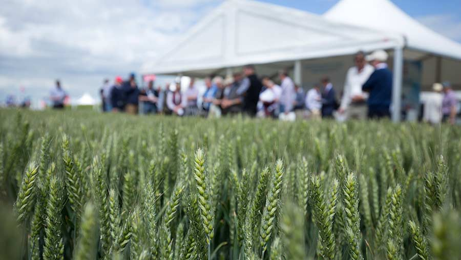 Winter wheat plots at Cereals 2017 © Tim Scrivener