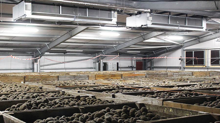 R S Cockerill's new box store holds up to 3,300t of potatoes © Oli Hill
