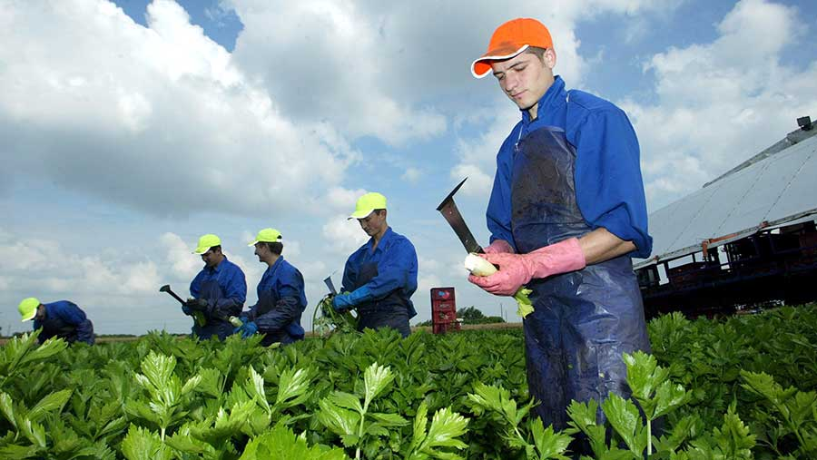 Migrant workers work on a farm
