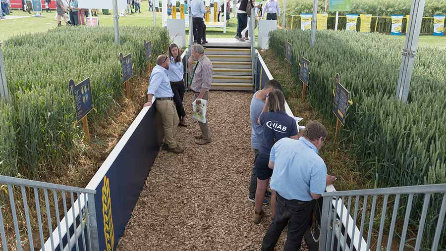 People view the soil pit at Cereals
