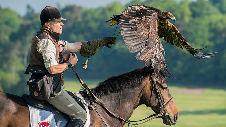 Martin Whitley rides a horse while handling a bird of prey