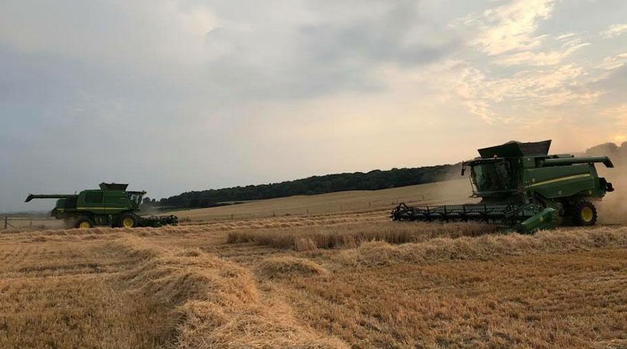 Two combines work in a field of winter barley on Dan Willis' farm