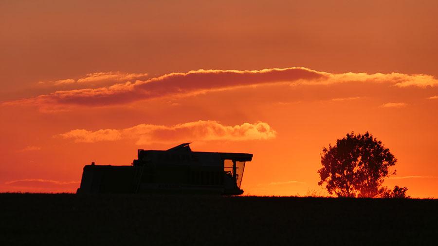 Harvest sihouette © Steven Sutton