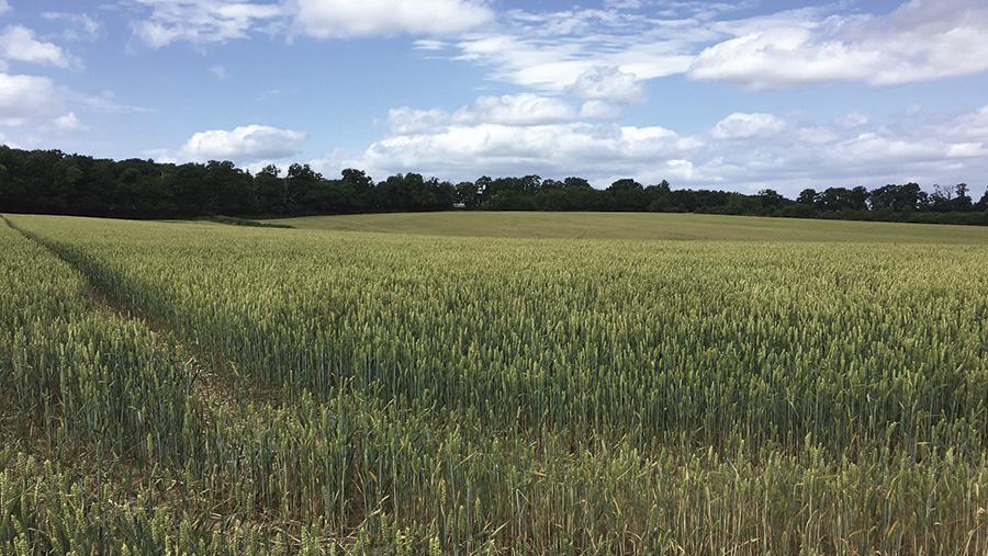 Land at Hadley