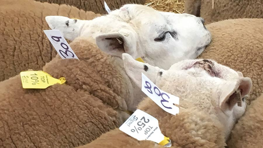 Tups with tags