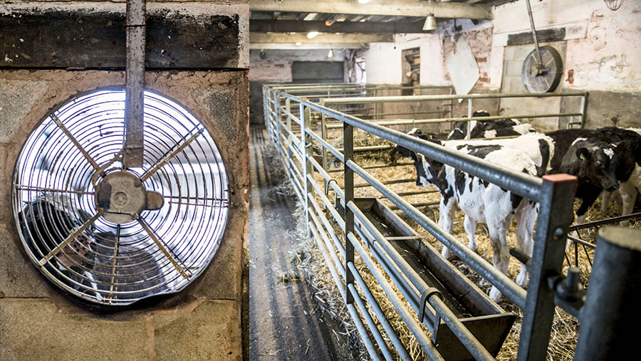 Two pictures side by side. The first shows a close-up of a fan, the second shows a calf pen with the fan running
