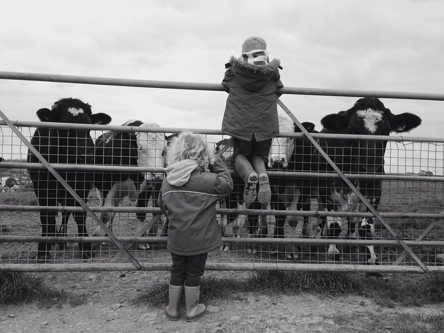 Two children in front of a gate with cows in a field