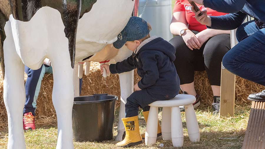 A young boy tries his hand at milking