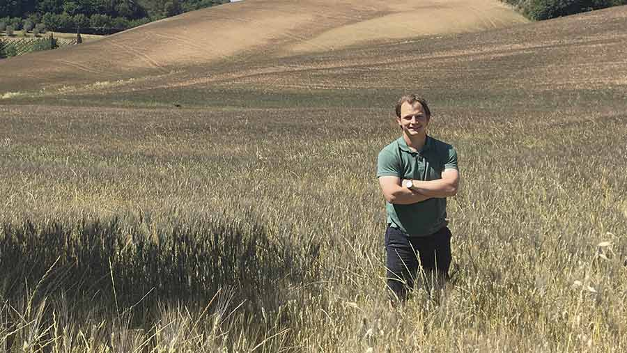 Field of wheat in Tuscany
