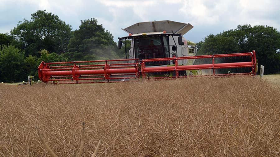 Harvesting oilseed rape in Kent © David Jones/RBI