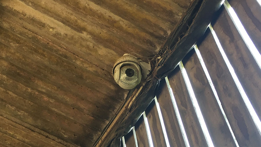 A camera in mounted in a livestock shed