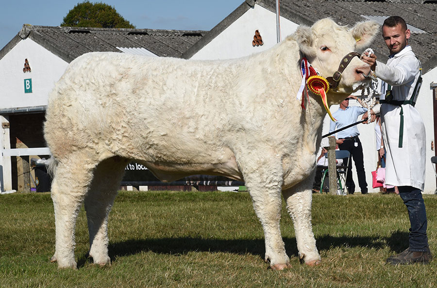 The Overall Beef Champion at the Great Yorkshire Show