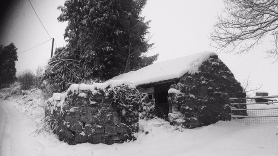 Pig sty in snow