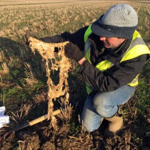 Brian Barker digging up his soiled cotton pants © AHDB Cereals & Oilseeds