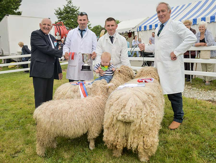 Sheep on show at Royal Cornwall Show 2018
