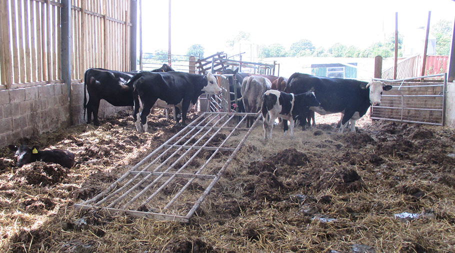Cows stand in a cattle shed surrounded by a number of hazards