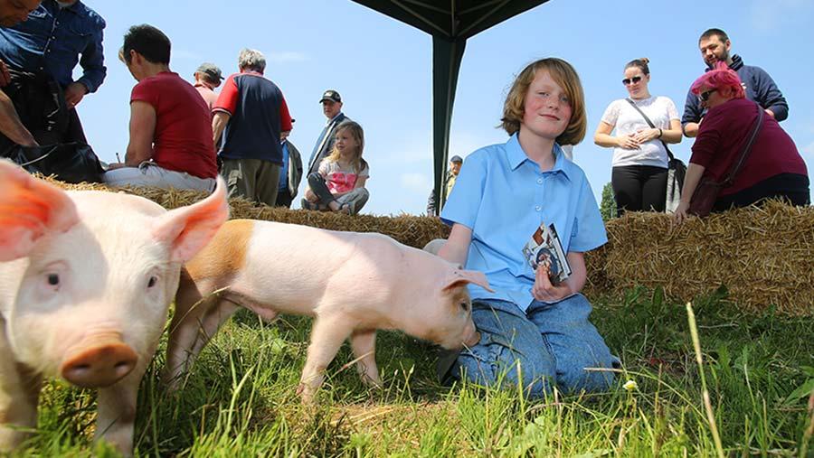 Open Farm Sunday pigs © LEAF Open Farm Sunday