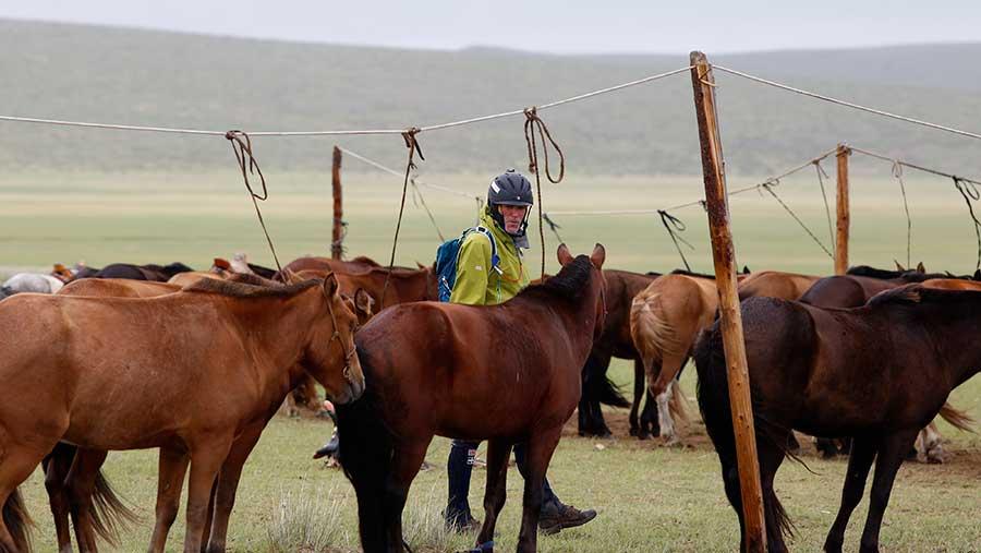 Cornish farmer tackles 1,000km Mongolian horse race