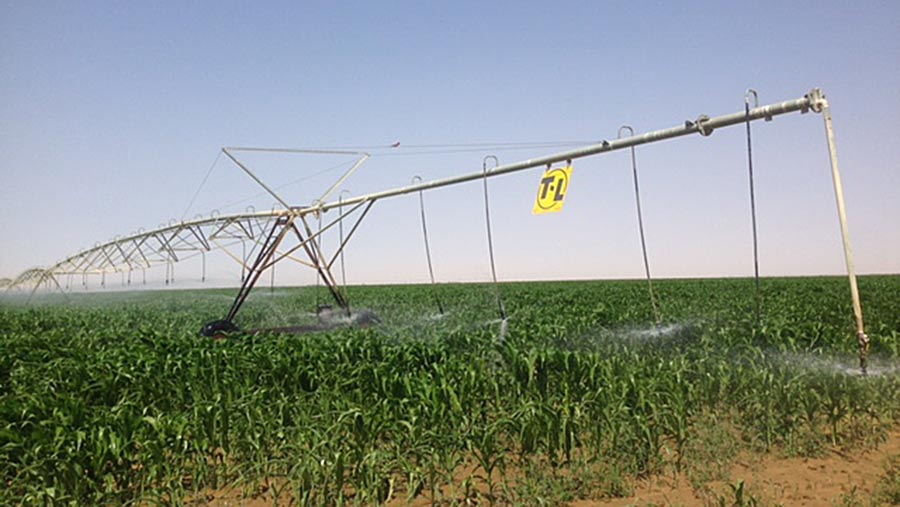 large-pivots-applying-water-to-maize