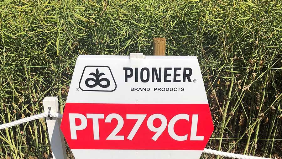 Pioneeer OSR variety PT279CL