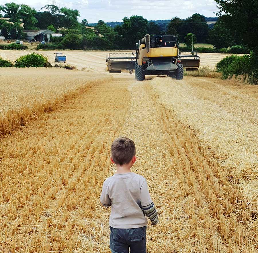 Little bot watching harvest