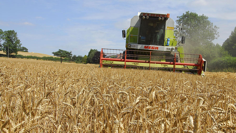 A wheat field is harvested by a combine