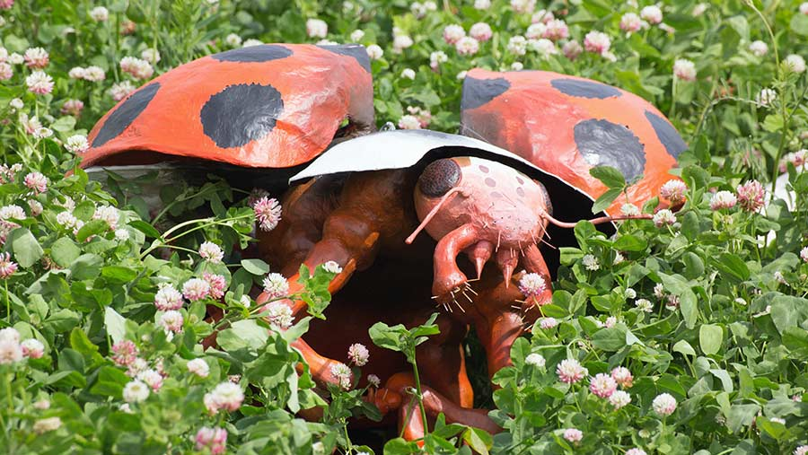 A giant lady bird in clover at Cereals © Tim Scrivener