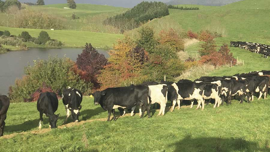 Cows stand in a field where the waterway has been fenced off