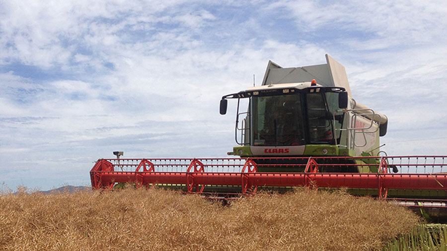 A combine works through a crop of canola