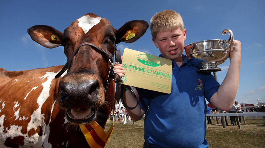 "Adam Lindsay stands next to Ayrshire dairy cow Willowfields Winnie 2. Adam holds a ""supreme champion"" plaque and trophy"