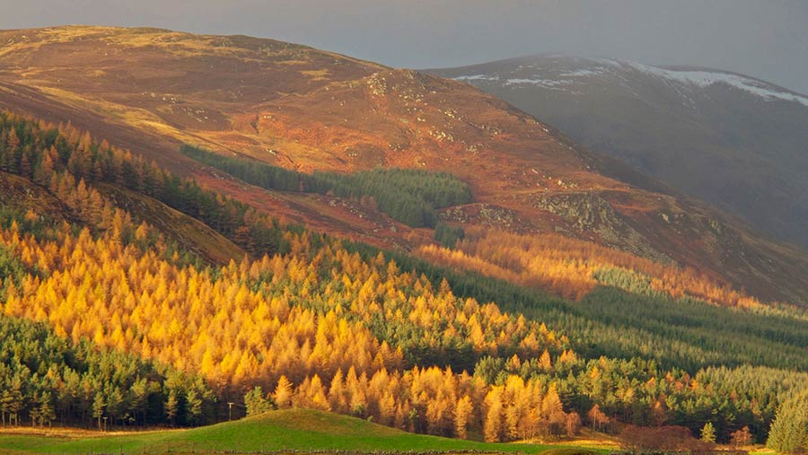 Trees turning colour in valley © Rose Tabberer