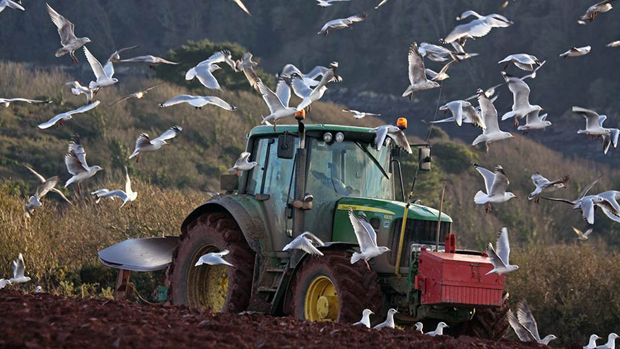 Ploughing tractor surronded by seaguls © Rose Tabberer