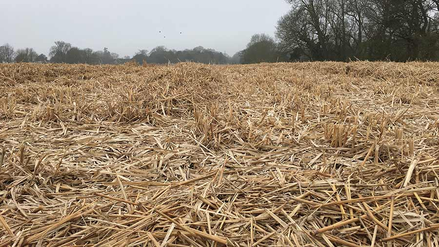 Miscanthus ready to be bailed