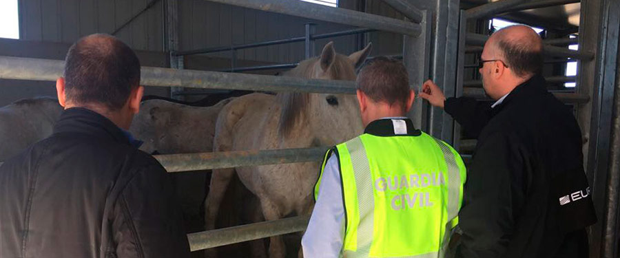 Police with horses