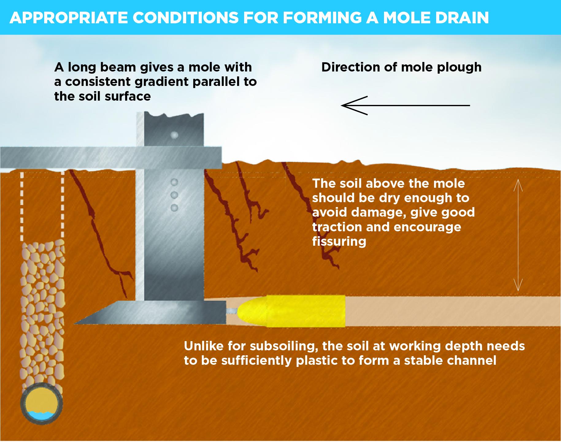 An illustration showing a mole drain