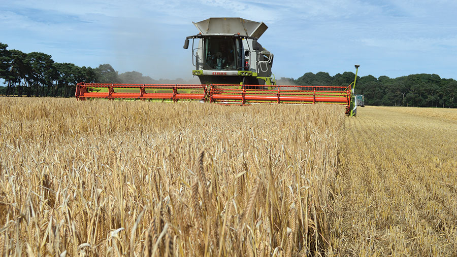 A combine harvests winter barley