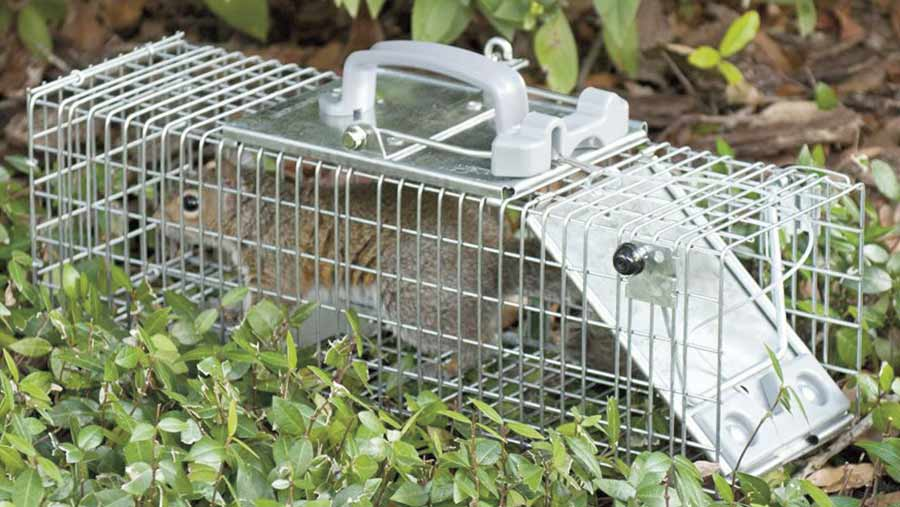 Controlling Rats Mice And Squirrels