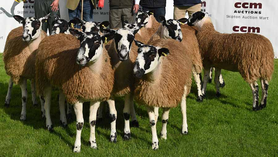 Kevin Wilson pictured with his championship pen of Mule gimmer lambs