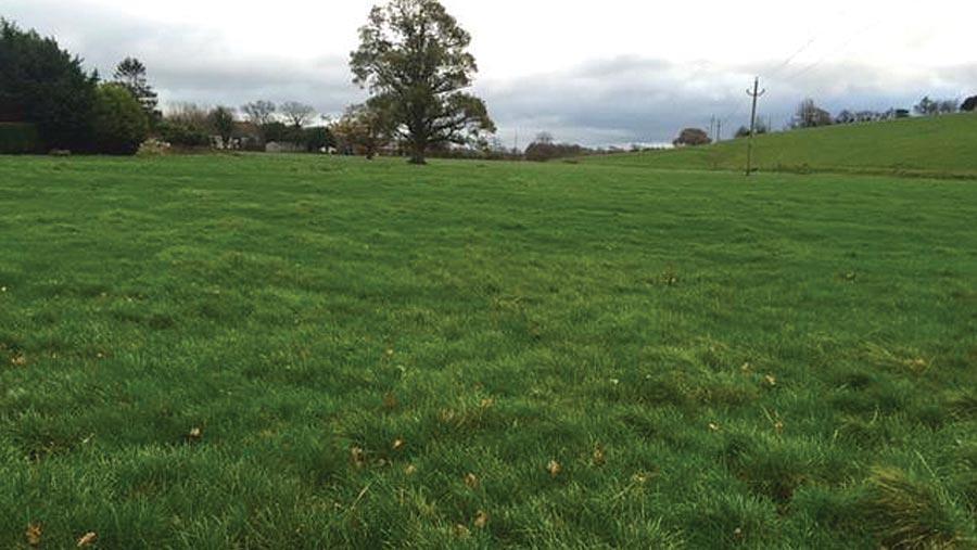 Land at Summerisland