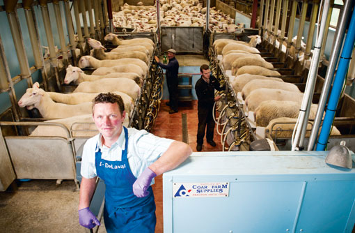 How To Turn A Profit From Milking Sheep Farmers Weekly