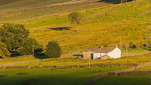 Welsh single farm payment entitlements