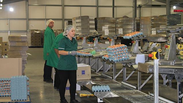 Blackdown Hills egg packing business