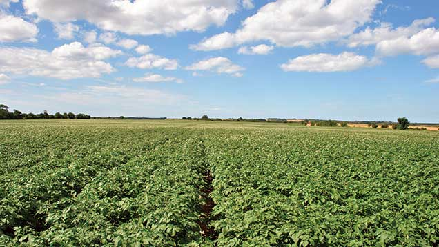 Sale highlight of the year:  Land at Trunch, North Walsham, Norfolk. Highly productive grade one land in an area starved of supply. An extraordinary depth of interest from nine bidders led to a result some 55% over the guide price of £2.2m.