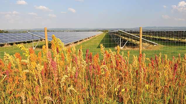 © Lightsource Renewable Energy