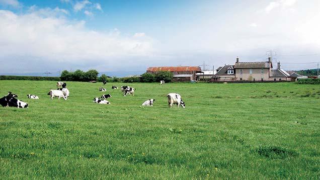 Dripps Farm is a 91-acre dairy farm in South Lanarkshire.